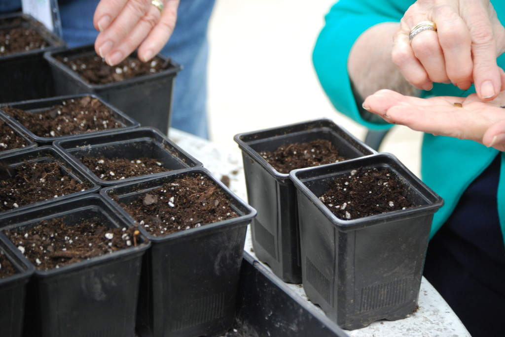 Seed sowing therapeutic horticulture eatbreathegarden