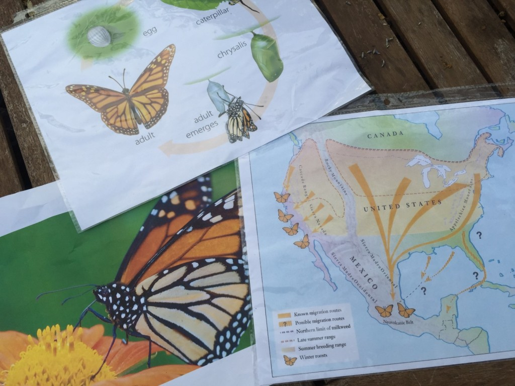Plant Pollinators: Butterfly Visual Cues