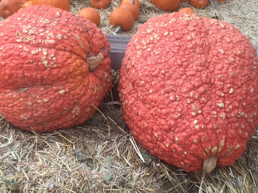 Red Warty Thing