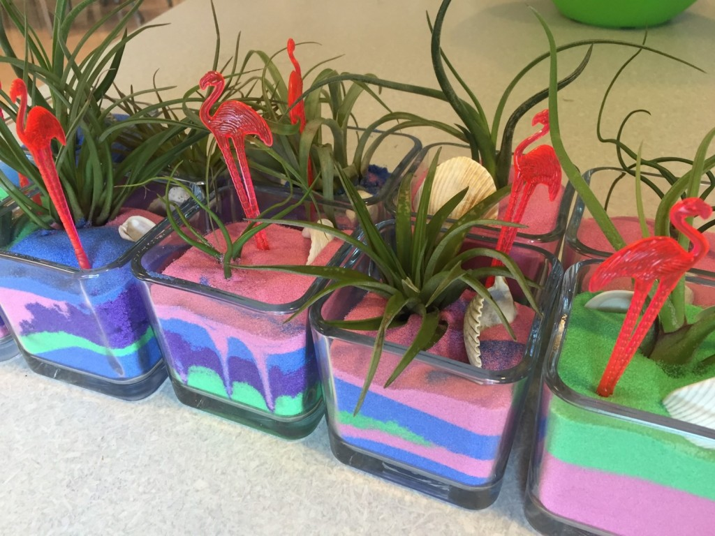 Air Plants and Sand Cubes