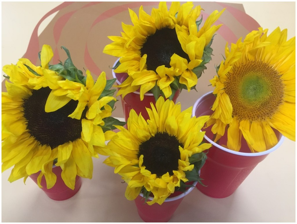 "Going ""vertical"" with sunflowers"