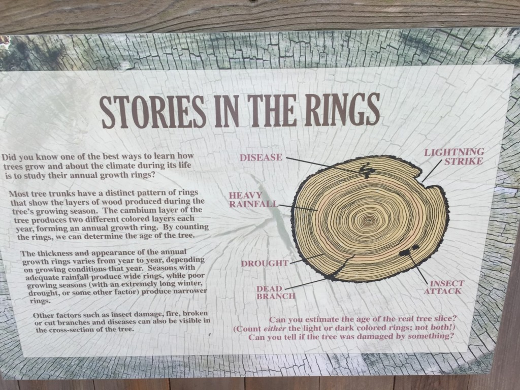 The Story of a Tree, as told by the tree rings - A Metaphor