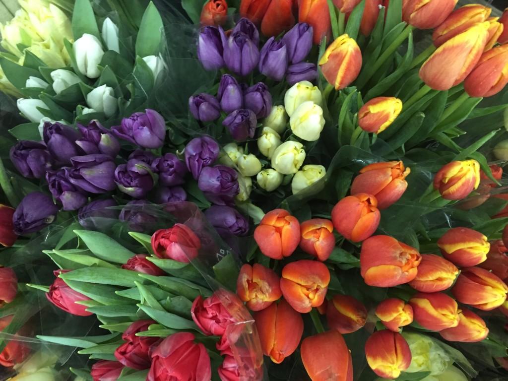 eatbreathegarden_tulip_spring_bulb