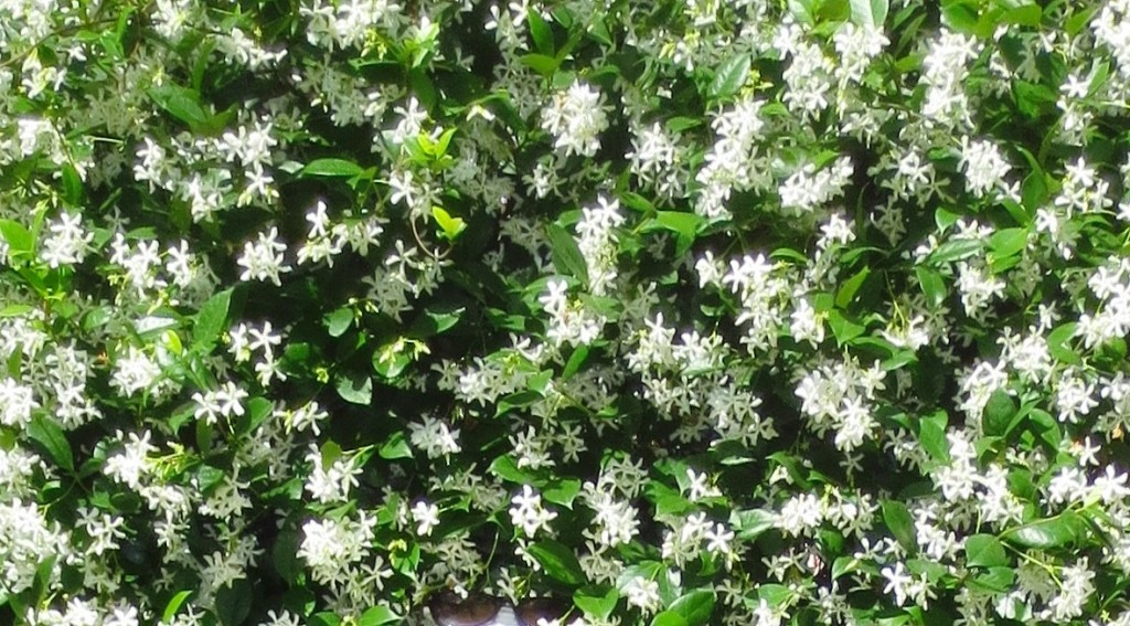confederatejasmine.lesleyfleming