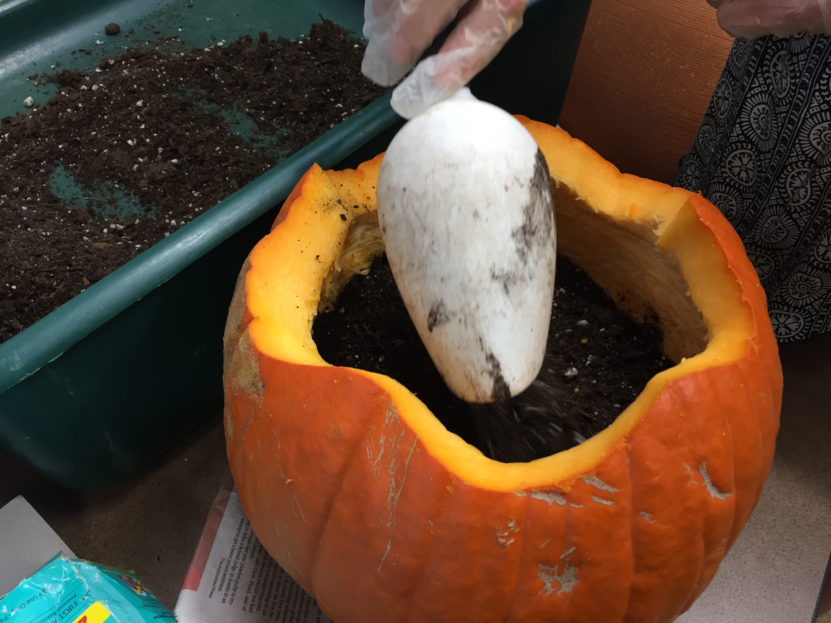 scoop-soil-pumpkin_eatbreathegarden